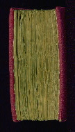 W.202, Fore-edge
