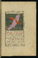 W.593, fol. 38b