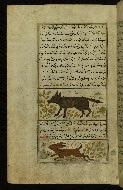 W.659, fol. 107a