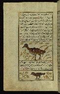 W.659, fol. 115a