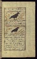 W.659, fol. 116b