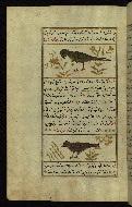 W.659, fol. 118a
