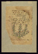 W.750, fol. W.750Ca