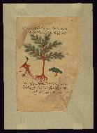W.750, fol. W.750Da